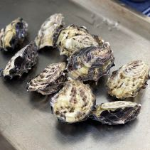Oysters from Pristine Oyster Farm (Coffin Bay)