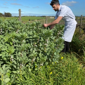 Tom collecting broad bean leaves for the chicken dish